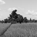 Schwarz-Weiß-Filter auch in der Digitalfotografie?