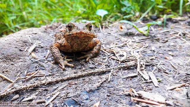 Photo of Blindschleiche und Erdkröte – Smartphone Fotos