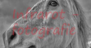 Pferd © Volker Abels - foto-reiseberichte.com