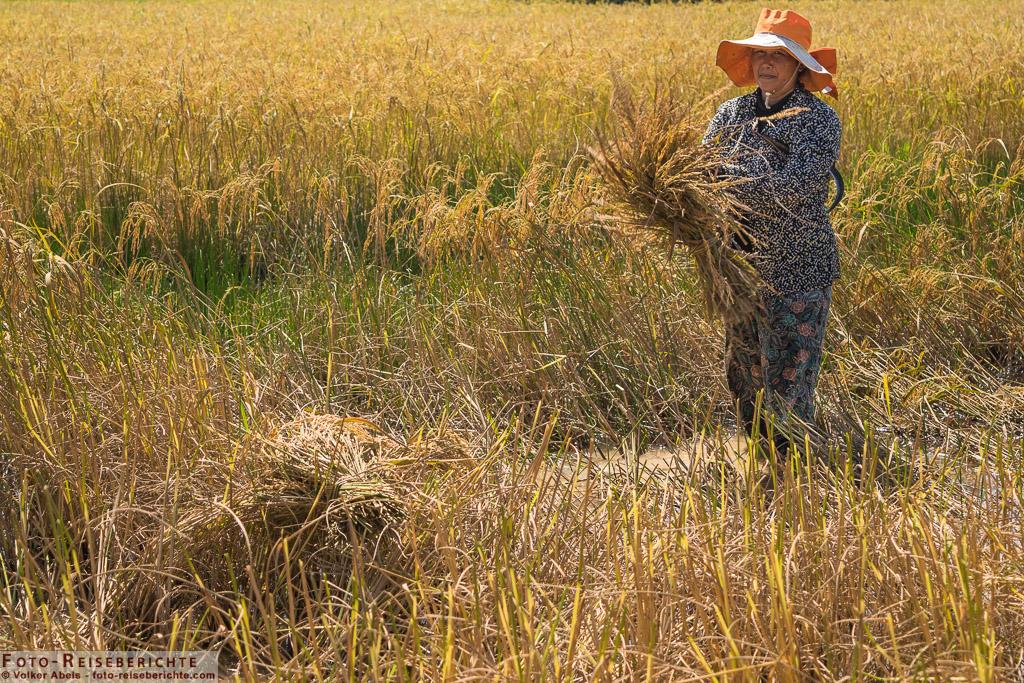 Ein Frau trägt ein Bündel Reis © Volker Abels - www.foto-reiseberichte.co