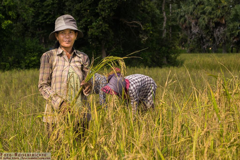 Eine Frau hält ein paar Rispen Reis in ihren Händen© Volker Abels - www.foto-reiseberichte.com