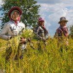 Kambodscha – draußen auf dem Land