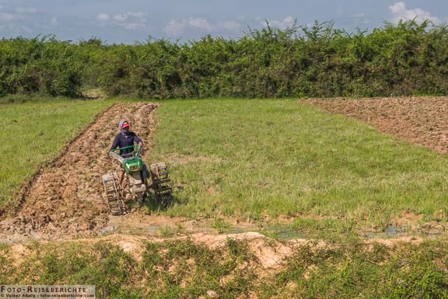 Hier wird ein Feld für die nächste Aussaat vorbereitet - Kambodscha © Volker Abels - www.foto-reiseberichte.com