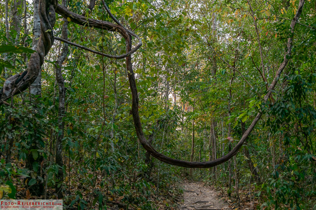 Der Monk Trail in Chaing Mai