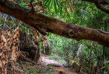 Photo of Monks Trail Chiang Mai – Zu Fuß zum Wat Phra That Doi Suthep